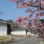 勧修寺 桜が美しい京都の門跡寺院【御朱印】