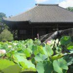 西大寺 蓮の花を巡るロータスロードと特別ご朱印