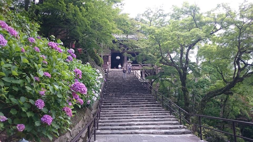 長谷寺(奈良) あじさいを見に行ってきました♪【御朱印】