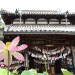生蓮寺(五條市) 蓮が美しい妊娠、安産祈願のお寺【御朱印】