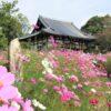 般若寺(奈良市)コスモスが咲き誇る飛鳥時代の古刹【御朱印】
