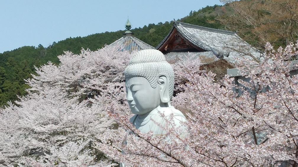壷阪寺(奈良) 桜大仏を見に行ってきました【御朱印】