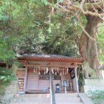 腰神神社(富田林市) 樹齢700年余りの藤の老樹がスゴイ!楠木正成公ゆかりの腰の神様