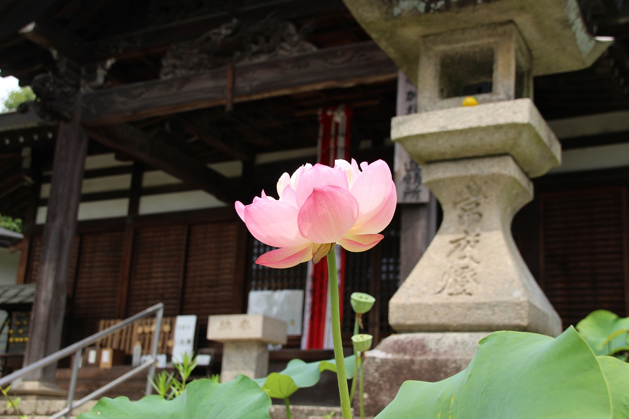 盛松寺(河内長野市) 空海が伝えた「柚子みそ」が今も残る與通のお大師さん
